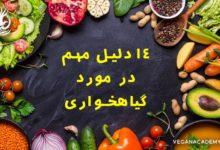 Photo of ۱۴ دلیل مهم در مورد گیاهخواری – دلایل گیاهخواری